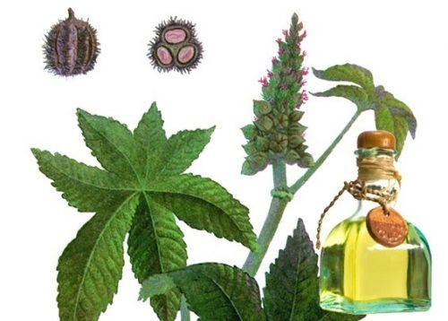 Касторовое масло для очищения кишечника: отзывы специалистов