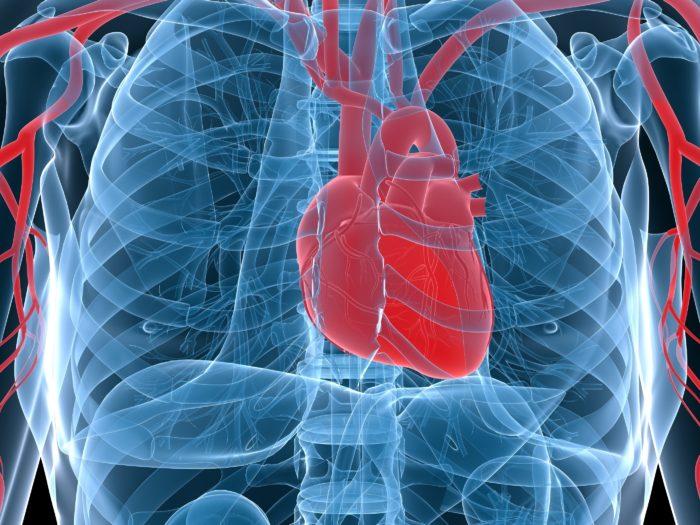 Паразиты в сердце человека: симптомы и лечение