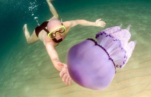plavat s meduzoj