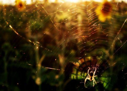 Укус паука Черная вдова