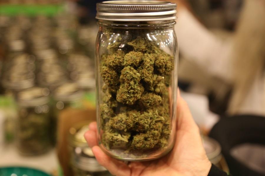 Конопля не вредна марихуана в сша не легальна