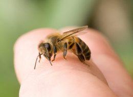 Укусила пчела: чем снять опухоль, первая помощь при укусе пчелы